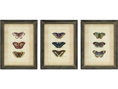 IMAX Corporation Accessories Butterfly Collection Wall Art - Set Of 3