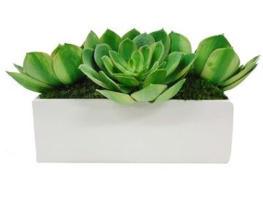 Giant Succulent Garden in White 10090