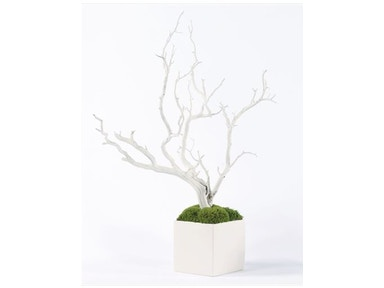 White Manzanita in White Cube 10075