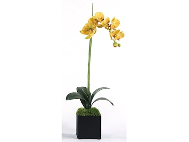 Yellow Single Orchid 10088