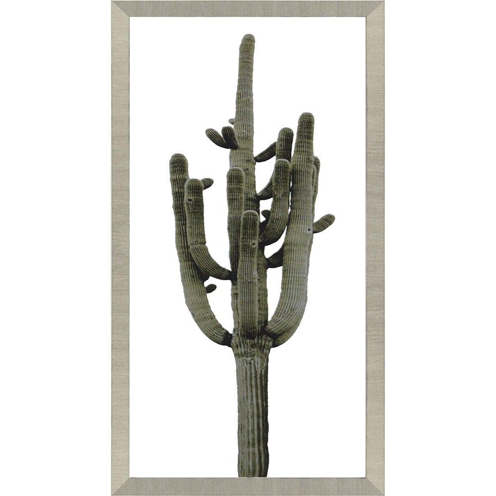 Paragon Saguaro II 4150