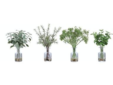 Kiddie Streasureams 20 Fantastic Ideas Bonsai Tree