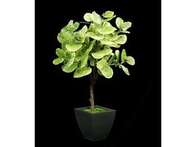 Tree Masters Accessories Next Generation Green Sea Grape Tree In