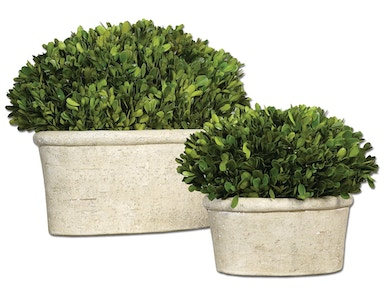 Pair or Preserved Boxwoods 122906